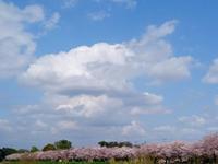 桜・・・・ - 遅ればせながら・・・