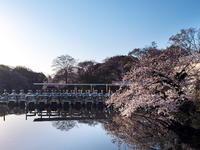 桜 2021 井の頭公園 - 幡ヶ谷写真部 ~写真好き司法書士の写真ブログ~