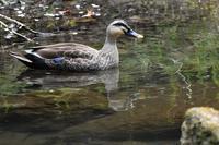 渓谷の春景色 - 鳥と共に日々是好日②