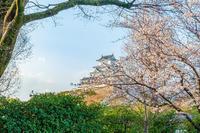 姫路城とさくら - マクロフォトトラベラー by PlumCrazy