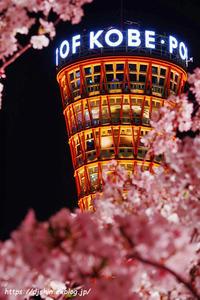 port-tower_with_sakura - Shin2 Limited