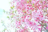 Candy pink - IL EST TROP TARD 時は過ぎゆく ... 2