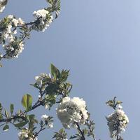 春到来とロックダウン再び L'arrivée du printemps et le 3ème confinement - 庭のかたち-Les formes de mon jardin- Ikuyo Pupier