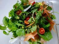 春のグリーンサラダ - Bのページ