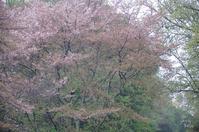 橿原市南浦町雨に霞む - ぶらり記録 2:奈良・大阪・・・