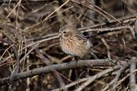 みちのく春小鳥3 - みちのくの大自然