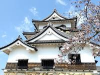彦根城天守と桜と ◆春の滋賀②◆ - Emily  diary