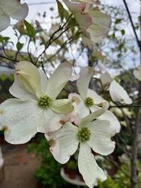 日曜雨 - hanasdiary.exblog.jp