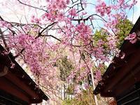 京都はええおすえ~。三千院、TheMitsuiにすっぽんに。。。 - Pockieのホテル宿フェチお気楽日記III