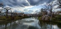 亀ヶ城公園(棚倉城跡)の桜と噴水@福島県棚倉町 - 963-7837