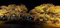 あさひ公園の夜桜@福島県石川町 - 963-7837
