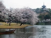 雨日の桜 - 夢・ファンダンゴ