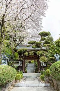 花のお寺高蔵寺 - あだっちゃんの花鳥風月