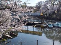 桜 2021 井の頭公園 その2 - 幡ヶ谷写真部 ~写真好き司法書士の写真ブログ~