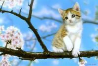 4月のデスクトップピクチャ(壁紙) - junya.blog(猫×犬)リアリズム絵画