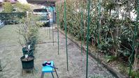 2021 鉢植えブルーベリーの防鳥網設置 in 広島市 - 初めてのブルーベリー栽培記