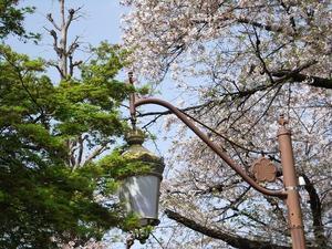 デジカメで綴る国立春 -