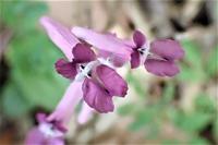 距のある花たち~その2~ - 里山の四季