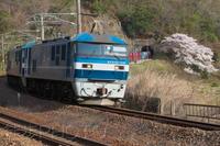瀬野西トンネルのソメイヨシノ(2021/04/01) - まるさん徒歩PHOTO 4:SLやまぐち号・山風景など…。 (2018.10.9~)