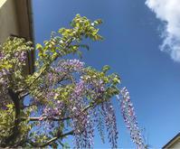藤の花 - 自然を見つめて自分と向き合う心の花