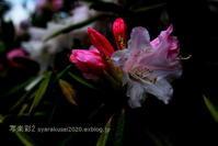 植物園に行く4月(2021年)1 - 写楽彩2