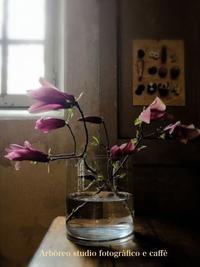 Sold out, thank you! - Arboreo  studio fotografico e caffe      『フォトスタジオと大人の小さなカフェ』