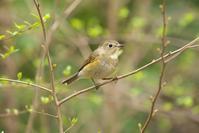 2021-053 帰ってしまった公園の冬鳥 - 近隣の野鳥を探して2