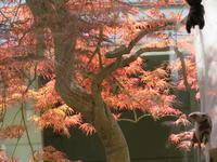 手向山(タムケヤマ)紅葉を活ける - 活花生活(2)