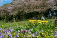 見沼の春(Ⅲ)@2021 - muku3のフォトスケッチ