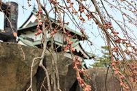 弘前公園で春探し_2021.04.02撮影 - 弘前感交劇場