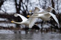 地元の渡りの中継地 - 北の大地で野鳥ときどきフライフィッシング