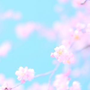 調布サイクルマップ ~ 2021 春コレクション ~ - カヌレ専門店 ル・カナール L'amour pour le cannele