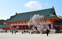 桜の京都① - バラとハーブのある暮らし Salon de Roses