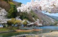 桜の京都② - バラとハーブのある暮らし Salon de Roses