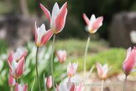 植物園に行く4月(2021年)5 - 写楽彩2