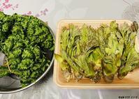 春の山菜 - 金沢市 床屋/理容室「ヘアーカット ノハラ ブログ」 〜メンズカットはオシャレな当店で〜