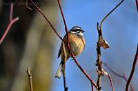 みちのく春の小鳥5 - みちのくの大自然