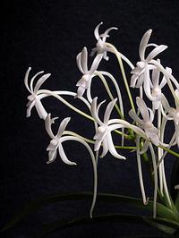庭仕事とスミレの花 - しらこばとWeblog