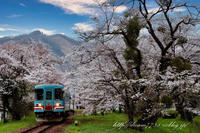 樽見鉄道 - HIROのフォトアルバム