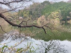 フル満水の室生ダム - WaterLettuceのブログ