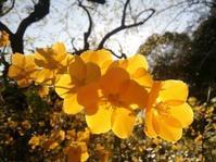 山吹家の花々… - 侘助つれづれ