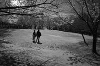 櫻の丘に流れる時間#0120210405 - Yoshi-A の写真の楽しみ