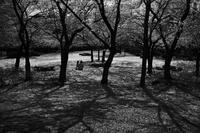 櫻の丘に流れる時間#0320210405 - Yoshi-A の写真の楽しみ