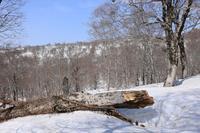 天然のベンチ - お山遊び