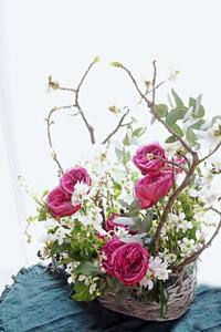 WABARAと桜と利休梅の競演 - お花に囲まれて