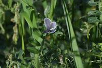 春先の蝶達(4/7) - 見沼の私記3
