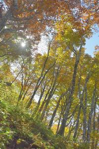 2020年のキオク・10月の山歩き⑯**琥珀色の森へ - きまぐれ*風音・・kanon・・