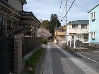 桜は散ってしまったけど - 散策で発見、自分の街のいいところ