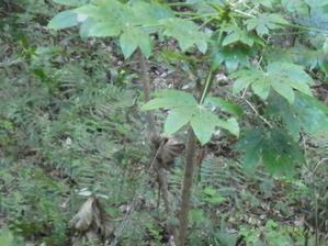 森の中でうごめく手 -