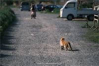 猫を追う者… - りゅう太のあしあと